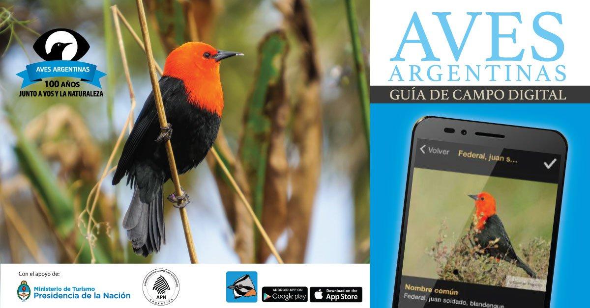 Salió una nueva app que sirve para identificar aves argentinas